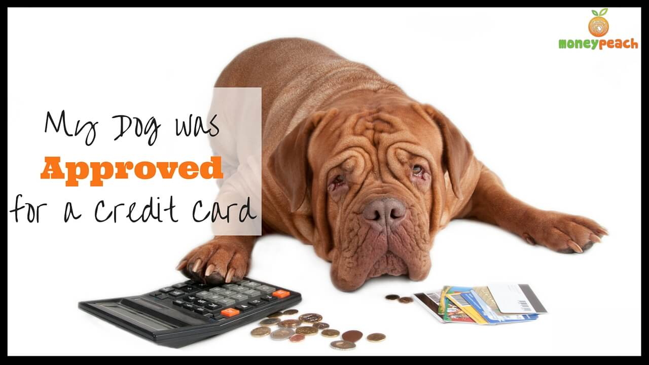 my dog was approved for a credit card